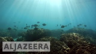 With world's oceans in danger, Mexico's Cabo Pulmo shows the way - ALJAZEERAENGLISH