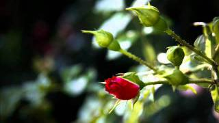 Besmrtna pesma Mike Antića, stihove govori Pedja Filipov... view on rutube.ru tube online.