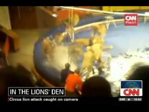 Leões atacam domador durante show de circo na Ucrânia