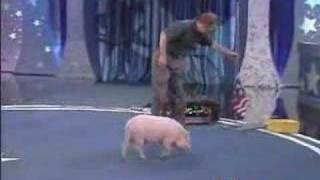 Pet Star - Smart Pig