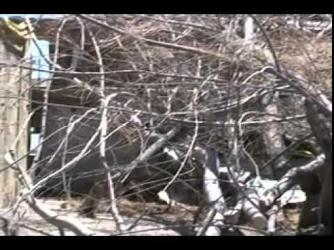 Podan árboles secos por frente frío 26_x264.mp4