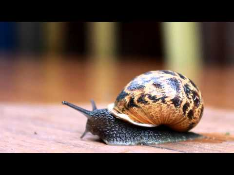 Canon EOS 1100D with 18-55mm Kit Lens: Video Test- Snail
