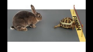 Video Of Real Race Between Hare And Tortoise Goes Viral - ABPNEWSTV