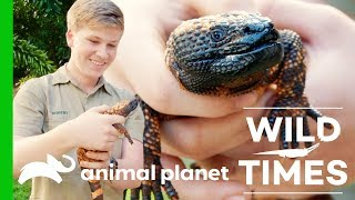 Gorgeous Giraffes and Venomous Gila Monsters! | Wild Times - ANIMALPLANETTV