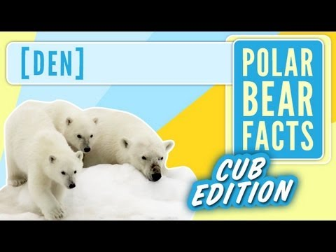 Polar Bear Cub Facts - Den - To The Arctic IMAX