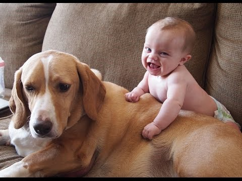 Cute Cats and Dogs Love Babies Compilation 2014 [HD]