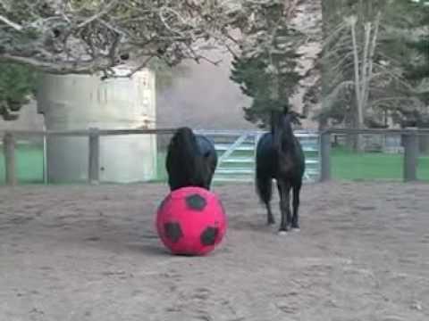 VM fotball hester vs mennesker football futbol