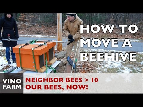 New Bees - How to Move a Beehive - Series Finale