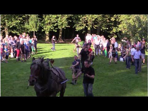 Belgian Draft Horse: Tug of war vs. 10 trained men
