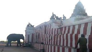 Watch: Wild elephant offers prayer at Karnataka's Himavad Gopalaswamy Temple - TIMESOFINDIACHANNEL
