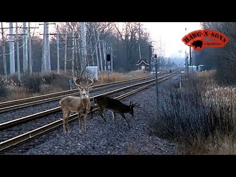 Deer Killed by Train!?! - 2 BIG Whitetail Bucks Crossing Railroad Tracks