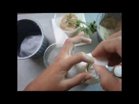 ➪ Sistema de Cultivo Hidropónico Casero con el Perejil ☆