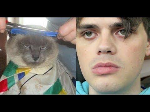 Internet animal impressions