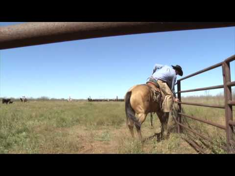 Muleshoe Ranch - 2014 Zoetis-AQHA Best Remuda Winner