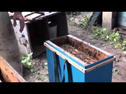 прилетковое устройство для ловли роев