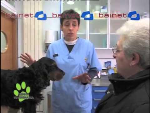 Vídeo La Clínica Veterinaria (Castración y biopsia de Roy)
