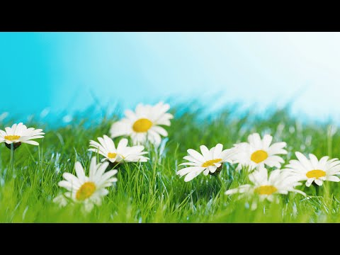 Morning Music Relaxing Background Music Healing Music