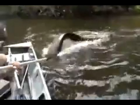 Anaconda Tries to Turn The Boat - Amazonia Channel