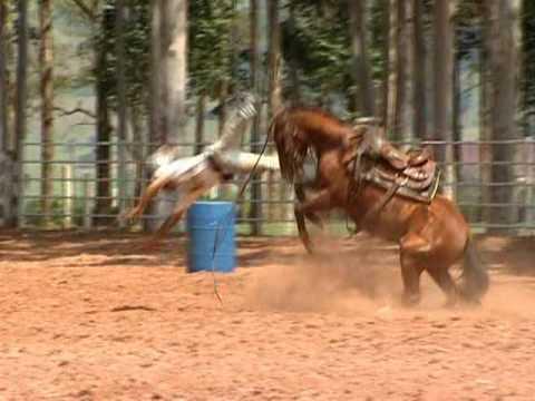 Como amansar um cavalo