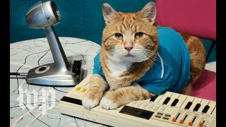 A look back at the life of Bento, the Keyboard Cat - WASHINGTONPOST