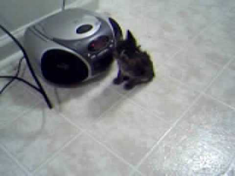 Video of My Kitten Squeaky Discovering the ...