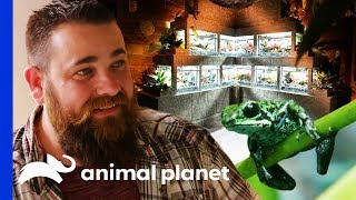 Incredible Ancient Mayan Terrarium For A Family Of Frogs | Scaled - ANIMALPLANETTV