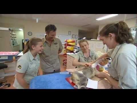 Bindi Irwin on Adam Hills Tonight - 18 April 2012 - HQ