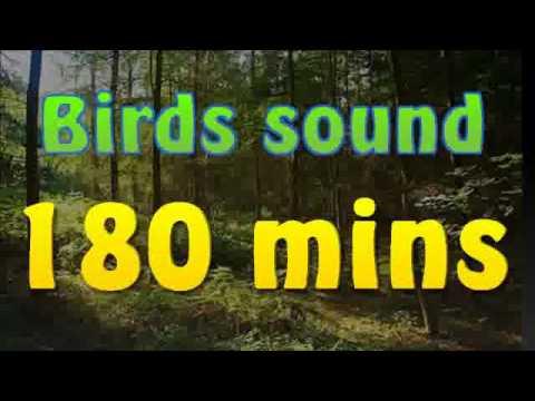 Sound of nature - birds song (no music) 180 mins