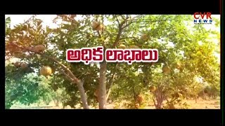 Earn Huge Money from Pomegranate Farming | Raithe Raju | CVR News - CVRNEWSOFFICIAL