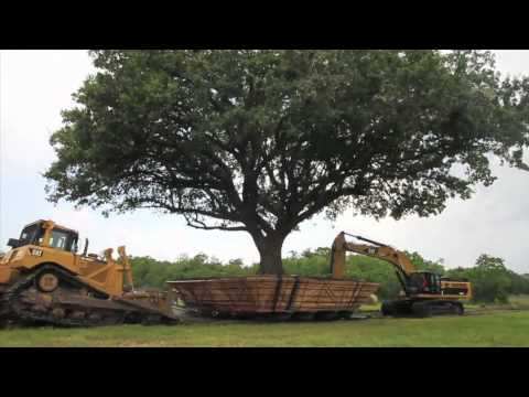 100 Year Old Compton Oak Move Successful in League City