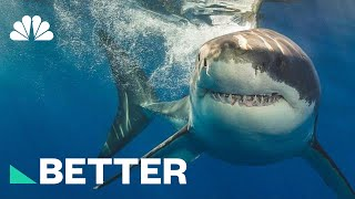 Chew On This: How To Protect Yourself From A Shark Attack | Better | NBC News - NBCNEWS