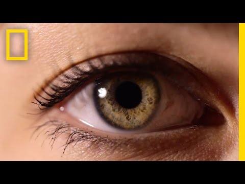 Eyes: The Windows to Your Health