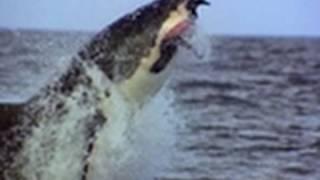 Ultimate Air Jaws - Normal Prey - Shark Week 2010