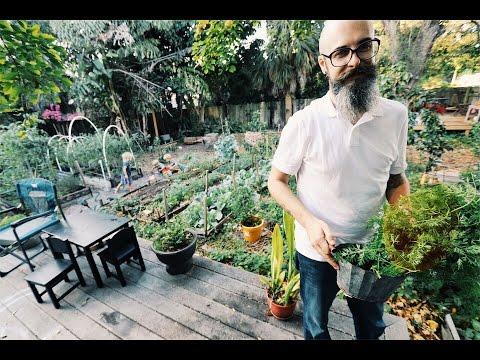 Man Turns His Urban Lawn Into A Garden Paradise
