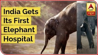 India Gets Its First Hospital Exclusively For Elephants In Mathura - ABPNEWSTV