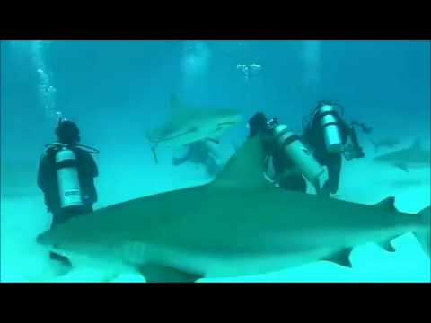 Shark Attack Scuba Diver Caught on video