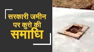 Watch: Thesildar constructs tomb for dead pet dog | तहसीलदार ने मृत कुत्ते की याद में बनाई समाधि - ZEENEWS