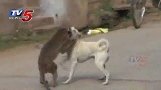 Monkey and Dog Friendship in Guntur : TV5 News - TV5NEWSCHANNEL