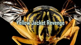 Royalty Free :Yellow Jacket Revenge