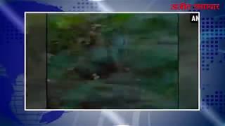 चंद्रपुर (महाराष्ट्र) :चंद्रपुर में एक बाघ पर्यटक के पीछे भागा