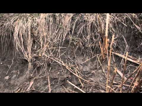 Pescuit oblete  la muste artificiale la baraj Bascov 24-02-2014 partea2-a