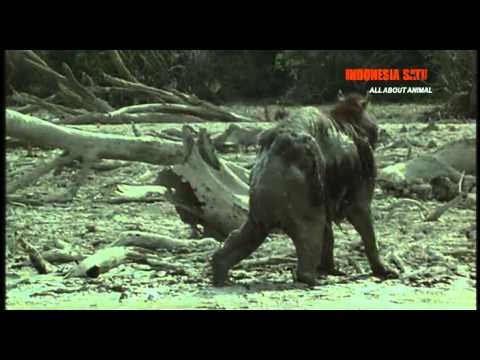 All About Animal - Kapibara Part 7