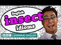 Insect Idioms - BBC Learning English (The Teacher)
