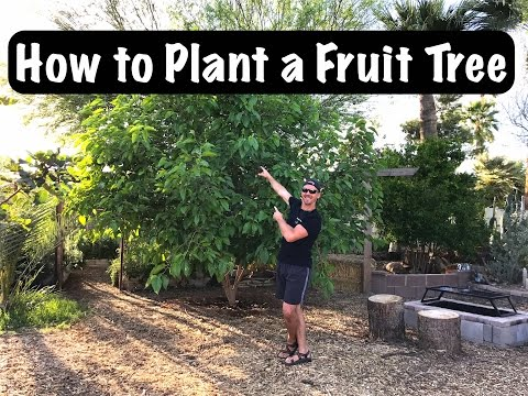 Gardening for Beginners - How to Sucessfully Plant a Fruit Tree in Your Backyard