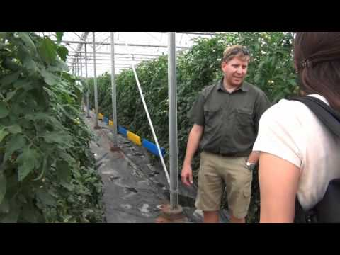 Hydroponics inside the greenhouse