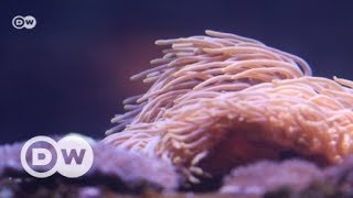 A climate refuge for corals | DW English - DEUTSCHEWELLEENGLISH
