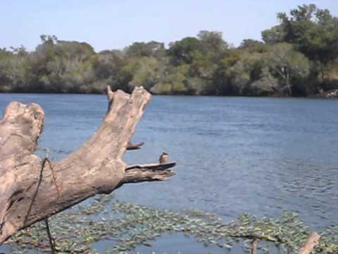 Kingfisher on Kafue River