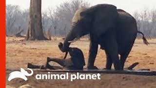 Herd of Elephants Comes Together To Rescue a Baby in Danger | Weird, True & Freaky - ANIMALPLANETTV