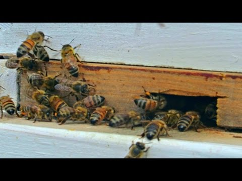 Entrance Reducer - Beekeeping