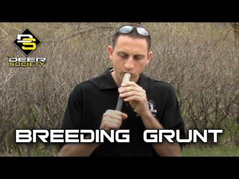 Deer Calling - Breeding Grunt